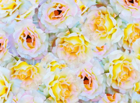 orange & yellow, rose